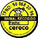 DURANTE EL A�O 2006 SE HAN RECOGIDO EN EL MUNICIPIO 98 PERROS Y 9 GATOS ABANDONADOS